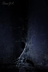 Nro 107 (Photo X Creative) Tags: night dark photography noche spider nikon photographer cobweb fotografia telaraa proyectofotografico