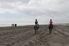IMG_EOS 7D201604036903 (David F-I) Tags: horse equestrian horseback horseriding trailriding trailride ctr tehapua watrc wellingtonareatrailridingclub competitivetrailriding sporthorse equestriansport competitivetrailride april2016 tehapua2016 tehapuaapril2016 watrctehapuaapril2016