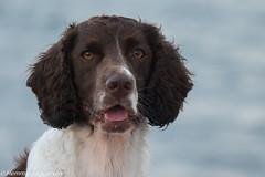 P1630338.jpg (Flemming Andersen) Tags: dogs water denmark spring outdoor hund dk hurup thistedmunicipality hurupthy helligsvej hebojebi