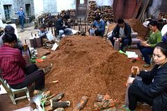 Planting mushrooms (MelindaChan ^..^) Tags: china guilin guangxi