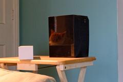 Taffy Reflected (joeldinda) Tags: reflection wall cat table nikon chat furniture interior kitty livingroom gato speaker april boxes taffy v2 2016 3118 1v2 nikon1v2 20160430lampshadowtaffyfluffy1v2raw453118