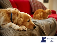 Como actuo si mi mascota tiene una alergia_ CLINICA VETERINARIA DEL BOSQUE 3 (tipsparamascotas) Tags: mascotas veterinaria delbosque estticacanina cuidadodemascotas veterinariadelbosqueveterinariacuidadodemascotasmascotassaludablesesteticacaninadelbosqueespecialistasencuidadodemascotaswwwveterinariadelbosquecomveterinariadelbosque mascotassaludables