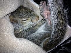 Adorable Squirrel (Hedi-Alana) Tags: boy baby cute nature animal squirrel sweet adorable