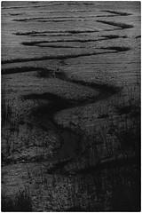 Written in mud (Stephen Braund) Tags: monochrome suffolk mud estuary
