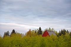 Taking a peak. (GWP_Photo) Tags: morning sky cloud canada tree calgary barn nikon alberta d750 nikkor 70300