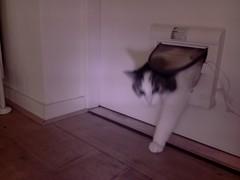 20160428-142659-i-1 (Catflap central) Tags: camera pet cats cat pi raspberry meow catdoor catflap kattenluik katzenklappe catflapj2nnl
