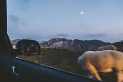 Selfie. (rawmeyn | Filmmaker & Photographer) Tags: salzburg austria carinthia mountainpass hochalpenstrasse grosglockner highalpineroad hochalpenstrase grosglocknerhochalpenstrase