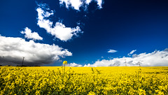 Summer Time (Minibert93) Tags: ireland summer sky field clouds canon landscape polarizer wicklow rapeseed 1635