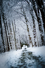 3/52 A cold long way. (Chris Steinert) Tags: winter white snow cold tree ice nature forest landscape frozen nikon d5000