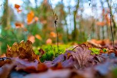 """Herbstbokeh"" im Winter"