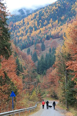 Rausor_2963 (Horatiu B. Daniel) Tags: pastel toamna munti retezat munte culori padure rausor