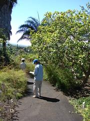 starr-071024-0236-Russelia_equisetiformis-habit_with_Kim-Enchanting_Floral_Gardens_of_Kula-Maui (Starr Environmental) Tags: russeliaequisetiformis