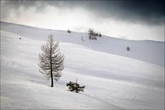 Winter Pasture (Festus Fluitjes) Tags: trees winter tree clouds fuji heinrich plum wolken bume baum skitouring skitour winterlandschaft festus salzburgerland grossarltal xe2 fluitjes xf1855mm