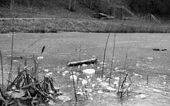 Broken Ice (Axel Sgaard Poulsen) Tags: winter sea bw ice pond outdoor hc110 hp5 stick