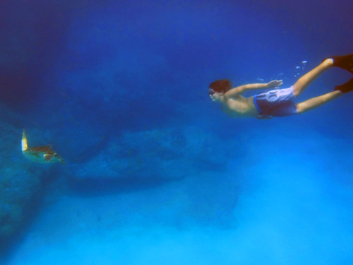 Sharks Cove 2015 06