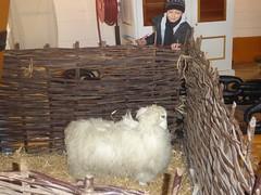 Jasim and sheep aboard HMS Warrior (alanaplin) Tags: sheep ff hmswarrior