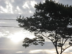 54/366 Composition (JessicaBelotto) Tags: tree nature composition heaven foto ar natureza dia céu days honey ao nuvem árvore livre escuro composição fotografando 366