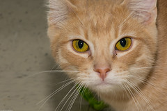 PAWS kittys (wacamerabuff) Tags: cat chat gato neko katze paws  gatto diekatze necko