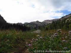 Teton Canyon en route to the Stairway to Heaven (Anne's Travels 4) Tags: canyon wyoming wilderness tetons stairwaytoheaven grandtetonnationalpark jedediahsmithwilderness