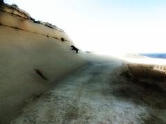Lady the Labrador on the salt pans of Gozo (cherylkerkin) Tags: dog dogs labrador rocky malta gozo walkingthedog saltpans runningdog rockycoastline