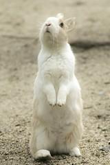 rabbit #3 (Y.Hassy) Tags: rabbit animal canon hiroshima 5d usagi