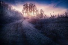 At dawn (Chrisnaton) Tags: winter cold nature sunrise walking landscape dawn path surreal together alongtheway morningmood walkingtogether walkinnature