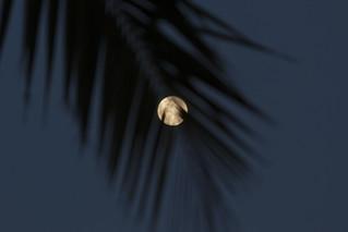 Full Moon Through Palm Leaves [Explore]