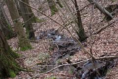 Steigerwald (Klaus R. aus O.) Tags: canon bayern wasser ast natur bach baum wandern rinde steigerwald nadelbaum laubbaum 650d