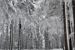 Rudawy Janowickie - w drodze na Wołek