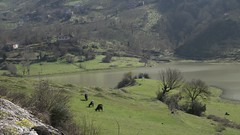 SAMSUNG CSC (fbegemenfb) Tags: tourism nature turkey spring outdoor trkiye samsung trkei frhling doa yedigller ilkbahar dzce turizm travelturkey nx1 yedigllermillipark samsungnx traveltoturkey samsungnx300 samsungnx1