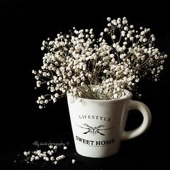 Dark & Moody (aenee) Tags: flowers white black moody spotmetering week9 sidelight darkmoody aenee dsc0817 mystillsundayclass 20160329 mysundayclass