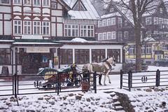 Winter Scene (Explored)