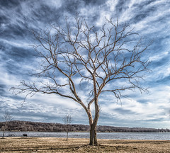 Tree (Jan Crites) Tags: tree nature clouds outdoors iowa mississippiriver leclaire lockanddam14 jancritesphotography