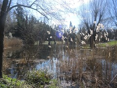 Im Volkspark Mariendorf, Berlin, NGIDn1160139586 (naturgucker.de) Tags: naturguckerde cwolfgangkatz 915119198 92636685 865714930 ngidn1160139586