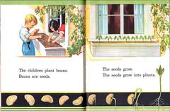 The children plant beans (katinthecupboard) Tags: california weather spring beans seeds 1937 vintagechildrensillustrations primaryscience guybrownwiser vintagechildrenstextbooks vintagechildrensreaders wiserguybrown
