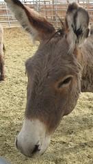 f0430 (2) (nevada4949) Tags: burro blm ridgecrest