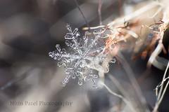 IMG_9185 (nitinpatel2) Tags: macro snowflakes patel nitin