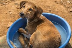 Goa Animal Shelter (Jackson Pollard) Tags: travel sunset sea portrait lighthouse india abandoned dogs animal sunrise landscape vines ruins asia fort goa beaches arabian shelter derelict aguada