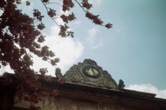 spring's gift. (Zheyra Toka) Tags: love film blossom 50mmf17 sooc hrkaierif minoltamaxxumaf5000