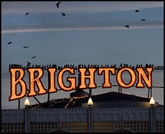 birdlife brighton style (BoblyP) Tags: uk greatbritain england sussex brighton unitedkingdom brightonbeach eastsussex starlings brightonpier murmuration birdlife brightonhove ineurope boblyp