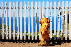 Hydrant (Eduardo Ruiz M.) Tags: color yellow hydrant fence point reyes
