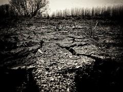 Abandoned (J.C. Moyer) Tags: blackandwhite tree nature grass earth horizon dry soil drought land postapocalyptic