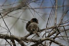 _DSC0379 (chris30300) Tags: france heron de pont parc oiseau camargue gau saintesmariesdelamer flamant provencealpesctedazur ornithologique