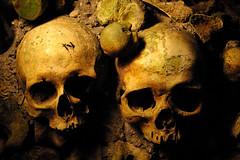 crnes (noor.khan.alam) Tags: france halloween mort squelette humain lugubre crnes morbide dcomposition mortel