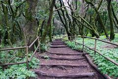 Senda (alanchanflor) Tags: green verde canaryisland canarias garajonay españa camino way senda naturaleza natura canon