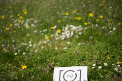 #6FMDD 1/10 - Fantastisch/Fantastic (derliebewolf) Tags: city flowers green nature landscape dresden spring fantastic dof bokeh natur zenitar 142 swirly helios 442 d600 fotomarathon swirlybokeh fmdd fotomarathondresden 6fmdd heliso442