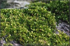 _Moss_01_@100% Crop () Tags: 2 zeiss t flickr y c sony evil 100mm contax f carl april wen ntu wesley 100 f2 mm ho flick cy chen   4  ilce    howen milc   a7r   chenhowen  wesleychen  a7rii a7r2 7rm2 ilce7rm2 t