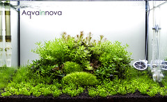 60L - 2 weeks after setup (Filipe Oliveira (FAAO)) Tags: aquarium freshwater planted natureaquarium faao aquaflora aqvainnova