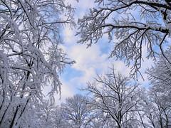 Winter in Bucharest (cod_gabriel) Tags: winter romania bucharest bucuresti bukarest roumanie boekarest bucarest iarna romnia bucureti iarn bazilescu bucareste parculbazilescu parcbazilescu