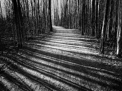 the hallway of shadows (marianna armata) Tags: trees light blackandwhite lines shadows path monochromatic hallway walkway e curved hss mariannaarmata p2280574